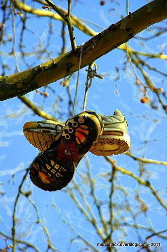 Chaussures dans un arbre