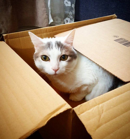 le chat de marciatack