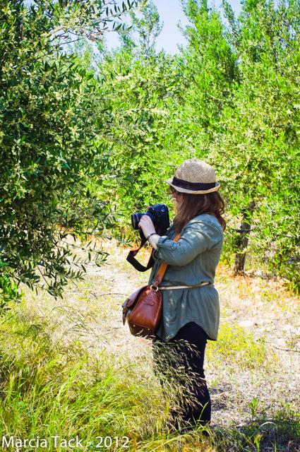 L'oliveraie de Rivesaltes