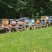 heberger-une-ruche