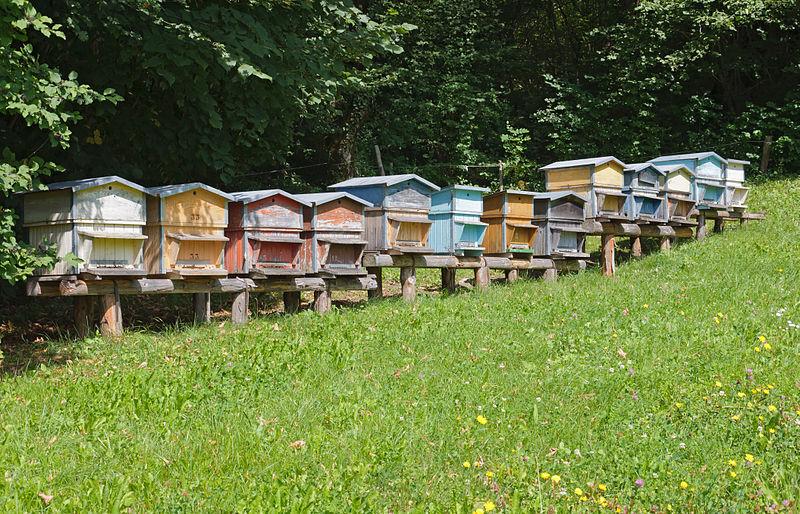 Et si vous h bergiez une ruche chez vous news marcia for Abeilles dans la maison