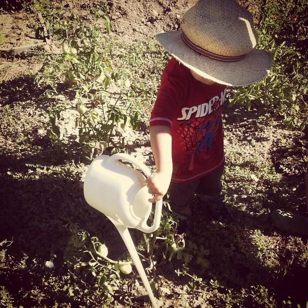 Comment jardiner sans jardin?
