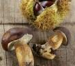 chataignes-et-champignons