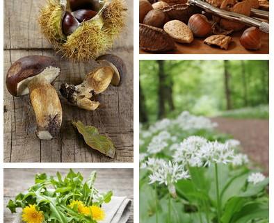 tout savoir sur les cueillettes d'automne