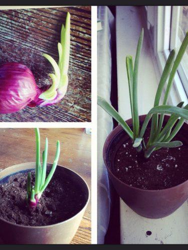 Faites pousser des légumes dans votre cuisine !