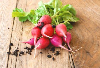 Comment conserver les radis ?