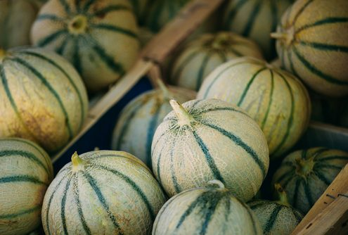 comment choisir un bon melon