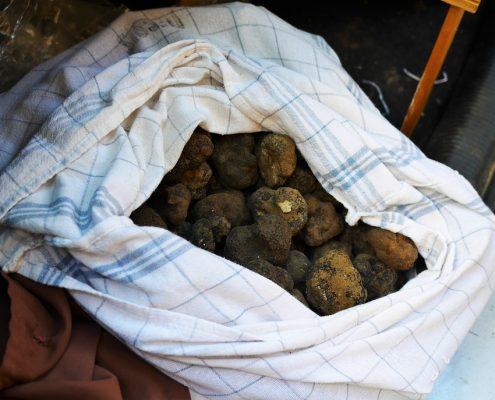 truffes-melanosporum