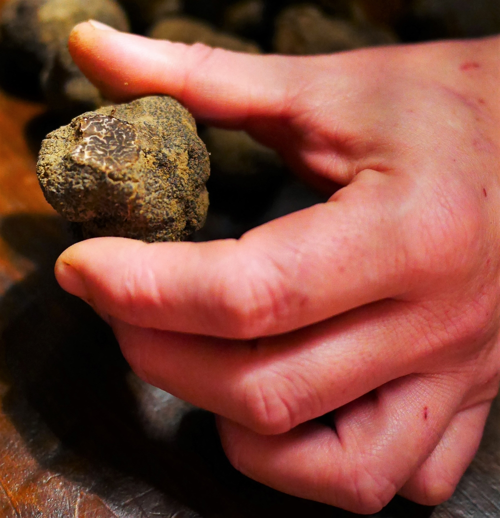 marbrure-truffes
