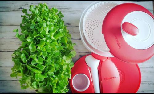 comment manger les salades qui montent