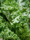 recettes pour cuisiner le kale