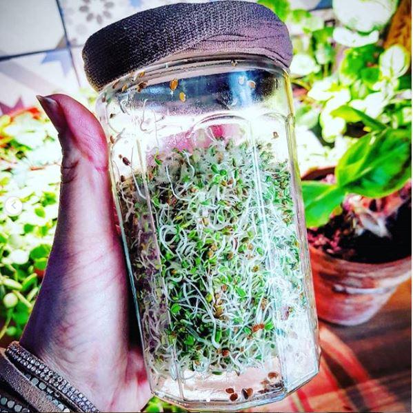 Faites vos graines germées à la maison, sans matériel spécifique !