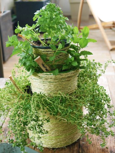 Créez une cascade d'aromatiques en récup !
