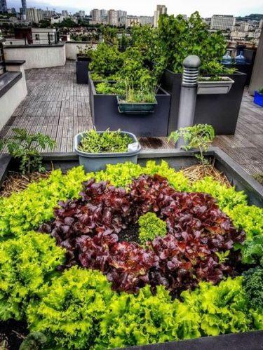 3 conseils pour réussir son potager urbain
