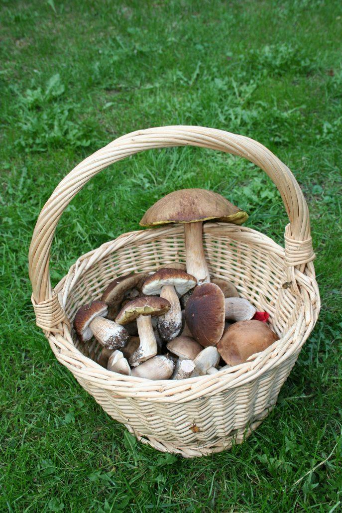 Recettes à préparer avec des champignons