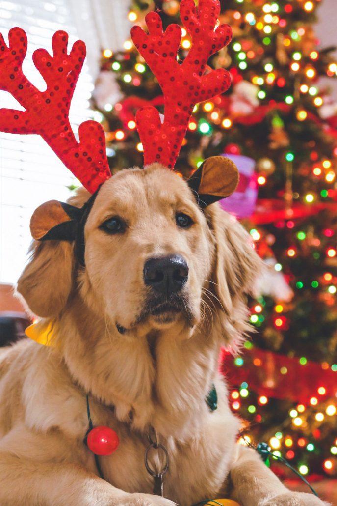 Passer Noël seul