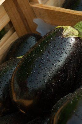 Tout savoir pour cuisiner l'aubergine